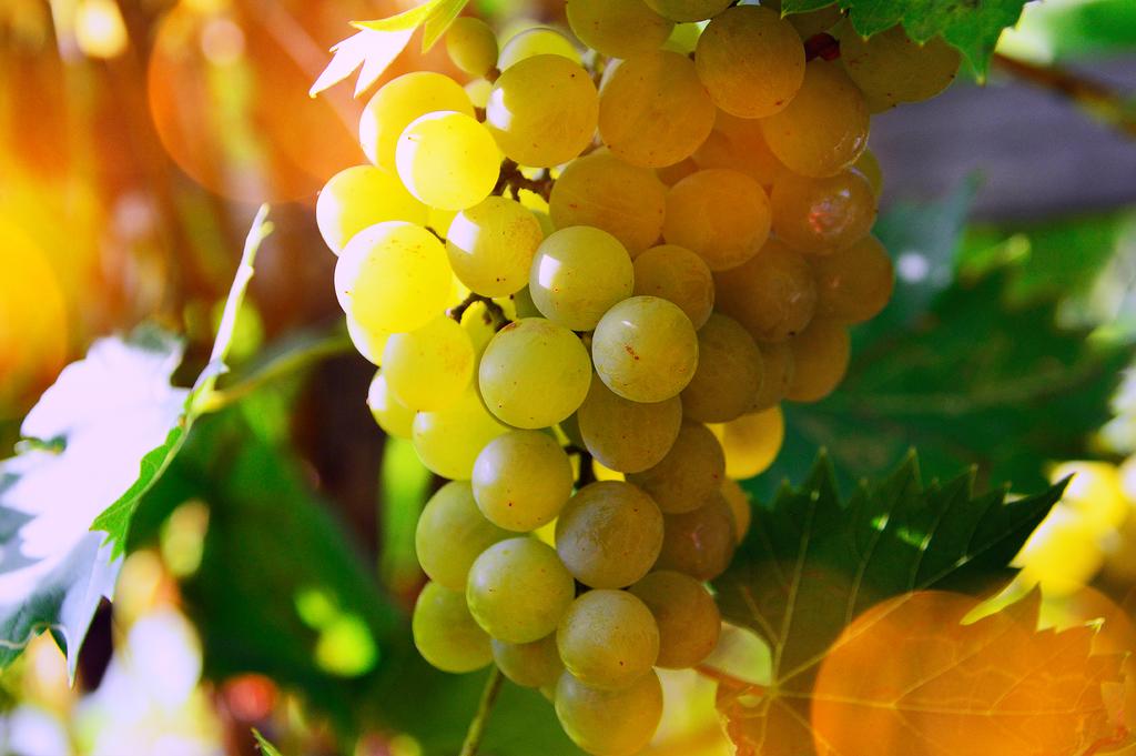 Liber Pater, le vin rouge le plus cher au monde